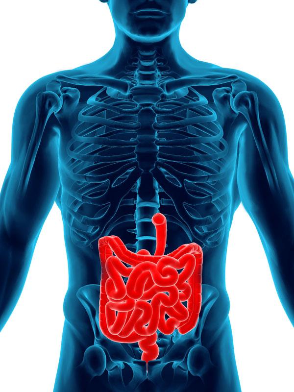 МРТ желудка и кишечника: современная диагностика брюшной полости