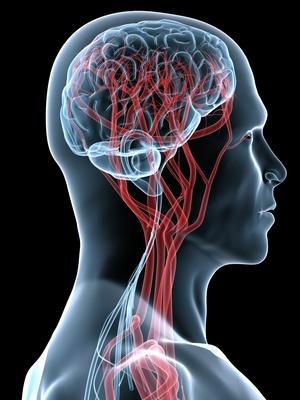 МРТ сосудов шеи: показание, методика и подготовка к исследованию