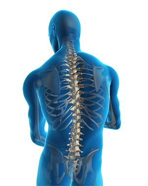 Как делают МРТ позвоночника: показания и особенности исследования