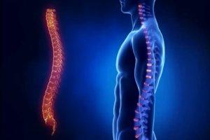 Стоимость МРТ позвоночника и особенности метода диагностики