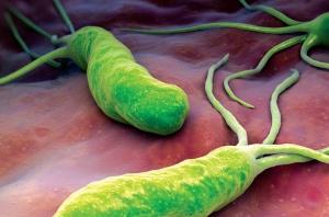 Характеристика бактерии Хеликобактер пилори