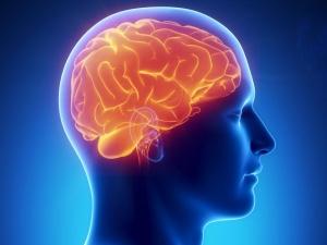 Значение гипофиза и гипоталамуса в организме человека