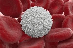 Лейкоциты – белые кровяные тельца крови, который защищают человекаот разных инфекций