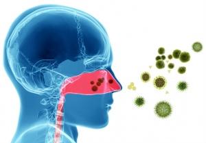 Бактериальная инфекция ЛОР-органов