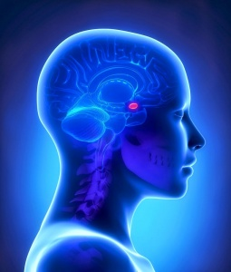 Акромегалия – эндокринная патология, при которой нарушаются функции передней доли гипофиза и повышается уровень СТГ