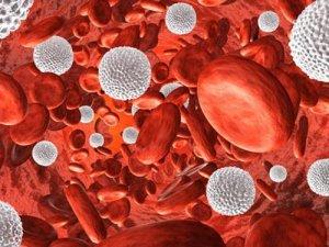 Лейкоцитоз – высокий уровень лейкоцитов в крови