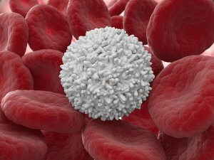 Лейкоцитоз – это состояние, которое характеризуется избыточным количеством лейкоцитов в крови