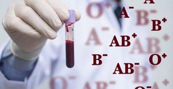 Группа крови определяется наличием или отсутствием двух антигенов А и В на поверхности эритроцитов и антител к ним в плазме крови