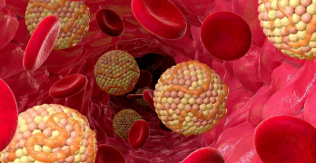 Холестерин – это липид, которое играет большую роль в обмене веществ