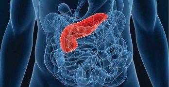 Поджелудочная железа – орган пищеварительной системы, который выполняет очень важные функции