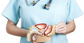 Простата – мужская половая железа