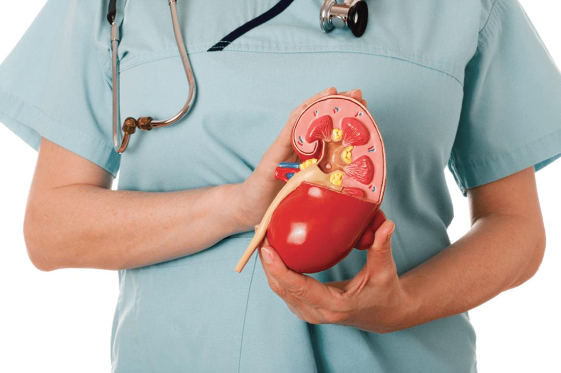 Как определить болезнь почек: анализы и обследования