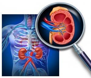 Диагностика позволяет визуализировать сосуды, их диаметр и структуру, а также оценить скорость кровотока в них