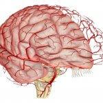 Исследование сосудов головного мозга: обзор лучших методов