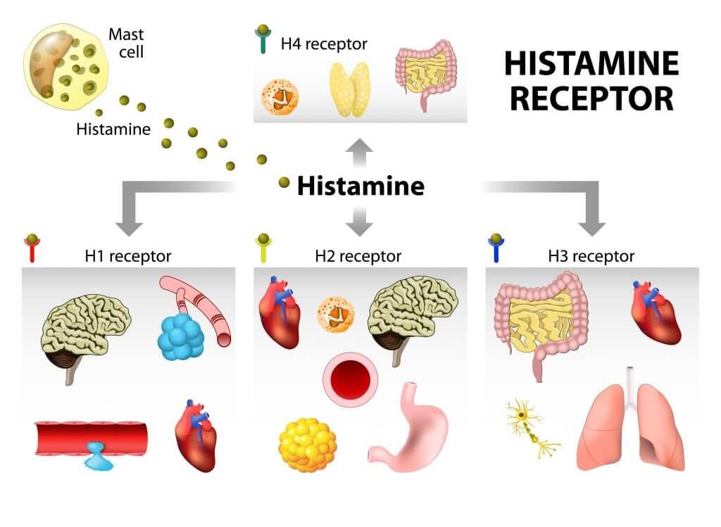 Данное вещество оказывает свое действие путем влияния на особые рецепторы, которые находятся на поверхности клеток