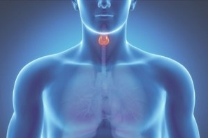 Свободный тироксин играет большую роль в обмене веществ