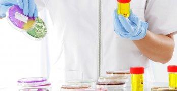 О чем говорят бактерии в анализе мочи и чем опасна бактериурия?