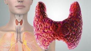 Т3 и Т4 являться специфическими гормонами щитовидной железы