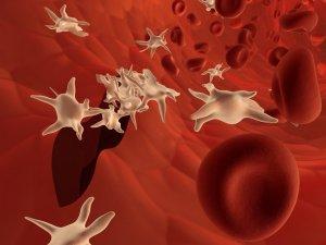 Пониженное количество тромбоцитов в медицине носит название тромбоцитопения