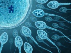 АСА – это антитела, которые вырабатываются организмом человека к антигенам сперматозоидов