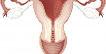 Матка – это гладкомышечный полый орган женщины, который расположенный в области малого таза
