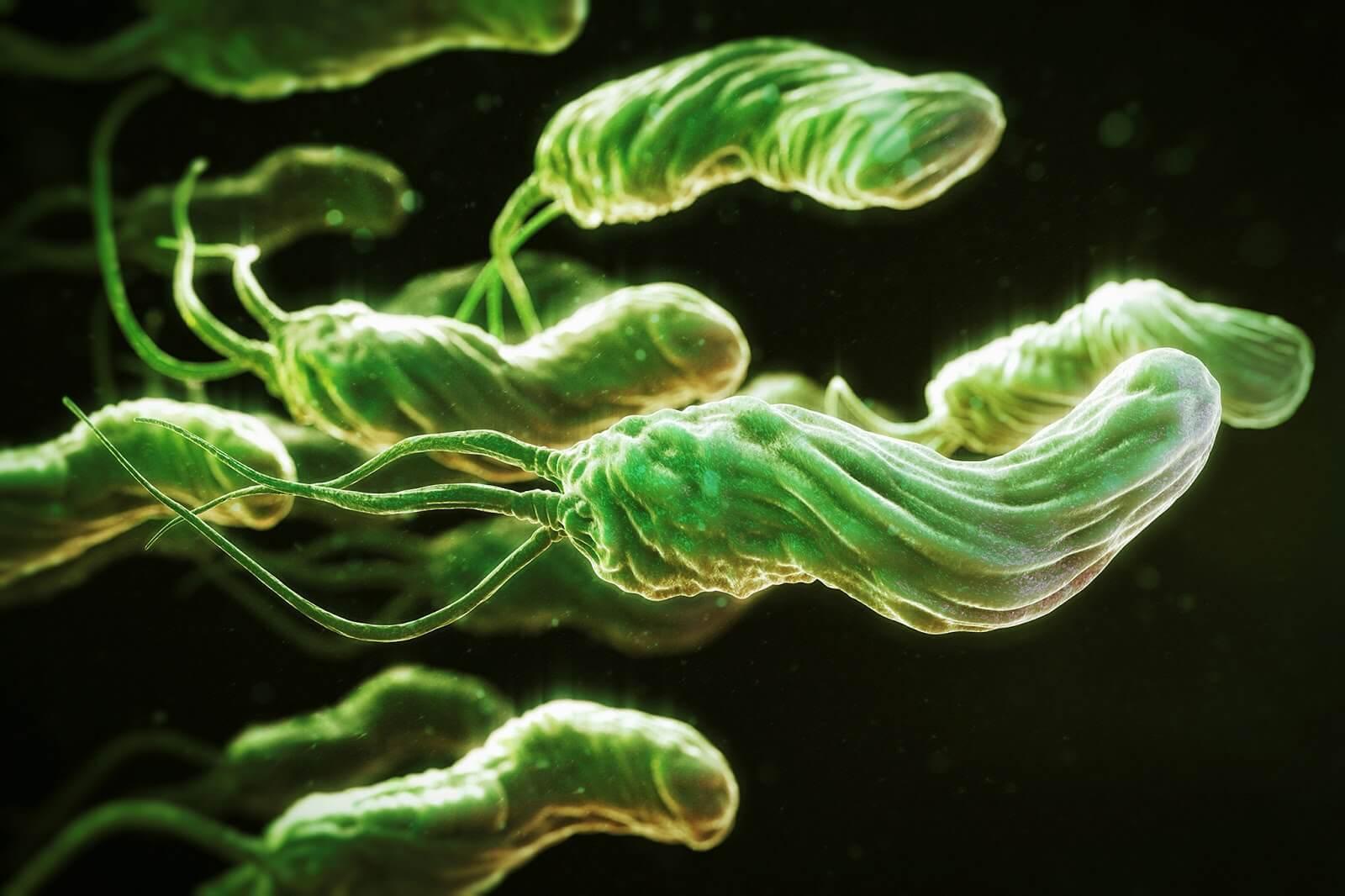 Диагностика Helicobacter pylori (биохимически по уреазе в биоптате)