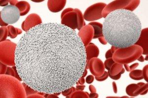 Почему понижены лейкоциты — основные причины лейкопении