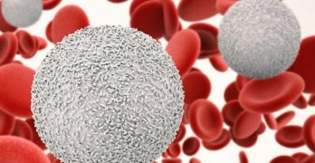 Лейкоциты – белые клетки крови