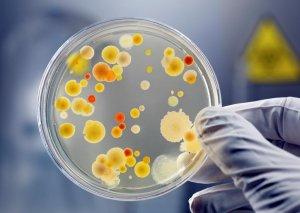 Результаты бакпосева помогут выявить инфекцию