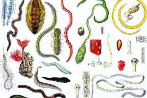 Какие анализы нужно сдать на паразитов — виды и их расшифровки