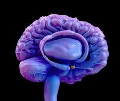 Избыток кортизола — какие анализы при синдроме Кушинга назначаются