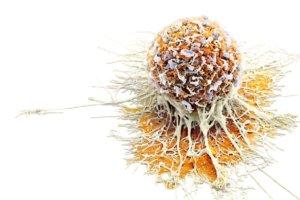 Нейрон-специфическая энолаза (NSE) — зачем нужен анализ, интерпретация результатов