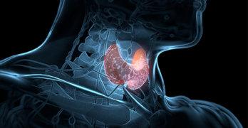 Как диагностируется диффузный токсический зоб