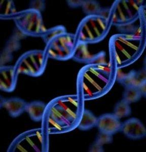 Антиген HLA-B27 и аутоиммунное заболевание