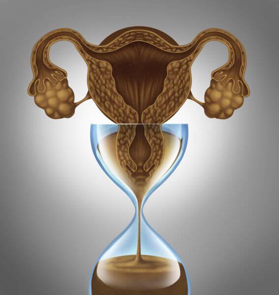 фертильность женщины
