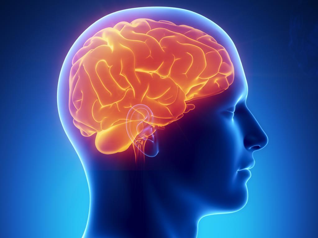 Гормоны гипофиза и гипоталамуса: соотношение, функции и возможные заболевания