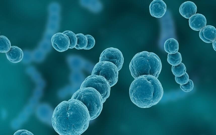 Гемолитический стрептококк группы А: признаки и методы лечения инфекции