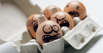 Куриные яйца – основной источник сальмонеллеза