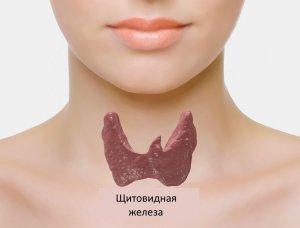 Щитовидная железа: нормальные размеры органа по возрасту