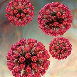 Антитела IgG вырабатываются через 3-4 недели после инфицирования и обеспечивают защиту от повторной инфекции