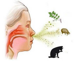 При аллергических реакциях количество свободного гистамина заметно увеличивается