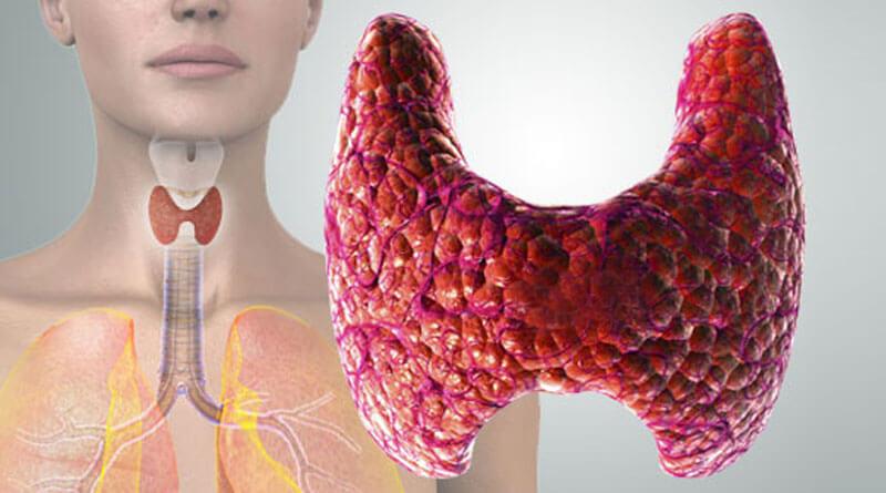 Как сдать анализ на гормоны щитовидной железы и и какими могут быть результаты?