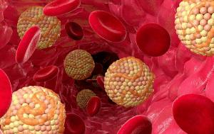 Липиды – органические вещества, которые входят в состав всех клеток организма