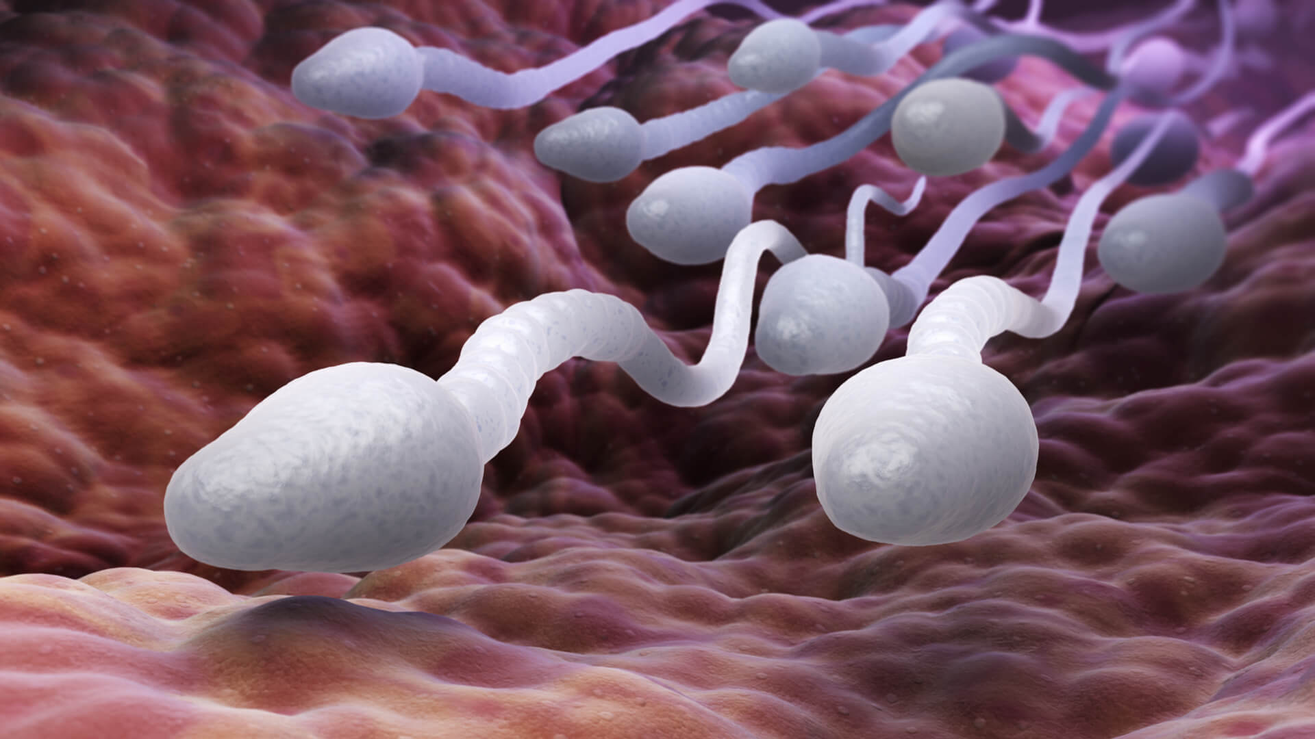 Почему повышается вязкость спермы и как ее уменьшить?