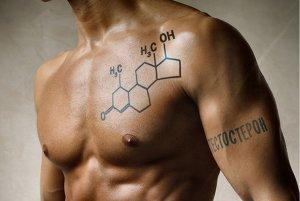 Мужские половые гормоны носят название андрогены