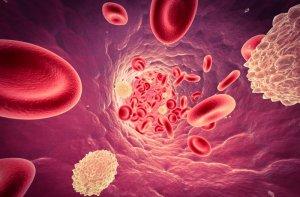 Много лейкоцитов в крови — что это значит и что делать?