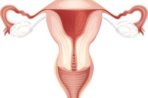 Гормоны яичников у женщин — гестагены, эстрогены, андрогены