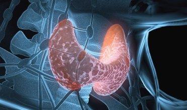 гипертиреоз и тиреоглобулин